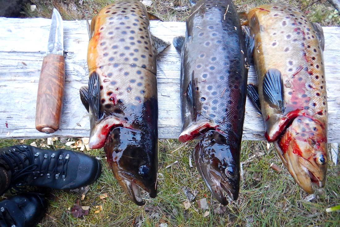 selvberging-fisk